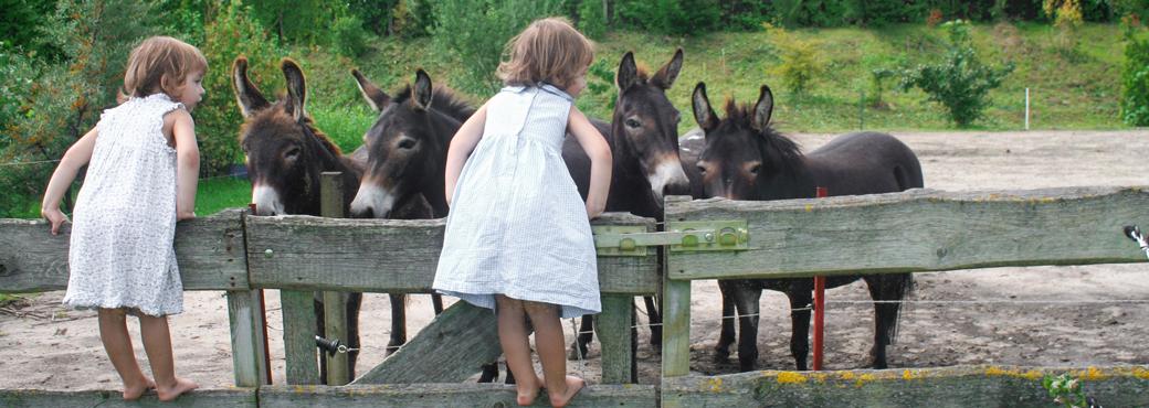 Motiv: Familien- und Bauernhofurlaub